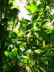 Foliage (MadeleineDove) Tags: plants rainforest foliage portmacquarie