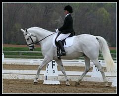 Nancy and Go Get'Em (elmstmiata) Tags: horse connemara horseshow trot dressage