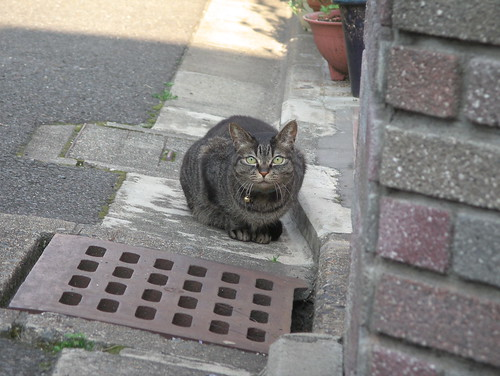 Today's Cat@20080423