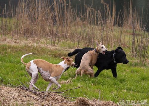 Nisha, Coco & the black dog