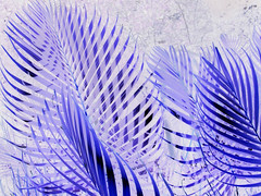 purple palms (inverted) (Mr.  Mark) Tags: light shadow plant abstract tree nature leaves lines leaf pattern purple palm invert markboucher costsrica
