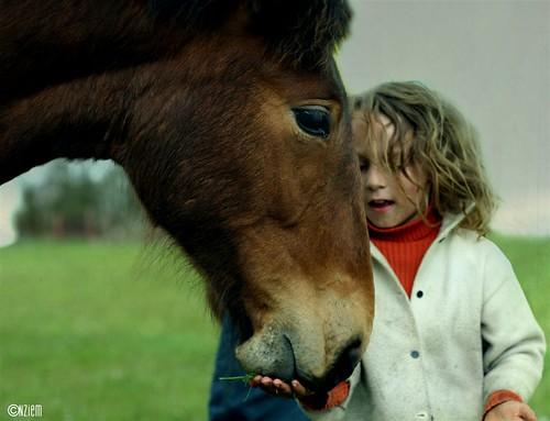 chevaux19