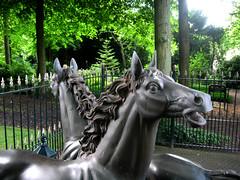 schön pferd