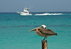 Two Worlds (Jeff Clow) Tags: ocean travel sea summer vacation holiday bird water outside outdoors boat waterfront weekend getaway shoreline pelican aruba transportation caribbean naturesfinest jeffclow bej anawesomeshot impressedbeauty ©jeffrclow