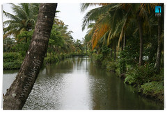Keralam - The Land of Coconut Trees (:: niKk clicKs ::) Tags: india reflection green nature water canon landscape kiss kerala powershot cochin coconuttrees southindia nikk  godsowncountry tripunithura explored mywinners canoneoskissdigitalx s5is goldstaraward picnikk therigveda