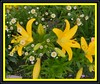 I Dedicate This Floral Arrangement From My Garden, For Our Irene, My Wonderful Friend! (Lynn English) Tags: yellow garden lily bouquet montecasino flickrsbest golddragon impressedbeauty impressedbyourbeauty citrit bestofyours anythingdigital mykindofpicturegallery dragongoldaward
