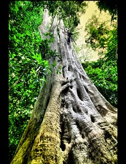 A Walk in The Jungle (! .  Angela Lobefaro . !) Tags: trip travel trees vacation sky holiday seascape tree nature beautiful rock stone angel clouds forest landscape thailand firefox rainforest rocks asia meer paradise mare stones quality gorgeous natur dream gimp himmel wolken natura bleu exotic hut ciel jungle cielo thai kohlanta nubes tropicalisland lovely blau nuages 2008 ubuntu thailandia sequoia krabi allrightsreserved italians andaman isola andamansea kolanta narima kubuntu virginforest amazingthailand sigma1020 thailandtravel cesvi giungla visiongroup holidaysvacanzeurlaub angiereal angelalobefaro angelamlobefaro wwwcesviorg tourismthailand massimilianogreco travellingaroundthailand vacanzethailandia