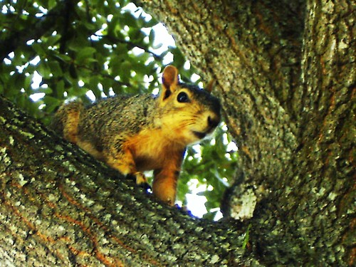 "~""Squirrel""~"