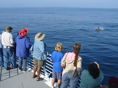 Whale Watchers aboard the Condor Express