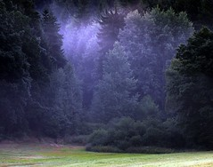 Elves land (Linda6769) Tags: mist tree green forest germany landscape thringen woods village thuringia grn landschaft spruce conifer thuringian nadelbaum konifere brden picturewithmusic
