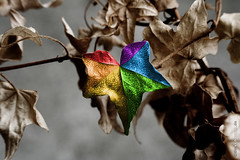 (Timsalabimm) Tags: colour leaves ivy dried bltter coloured farbe bunt efeu vertrocknet