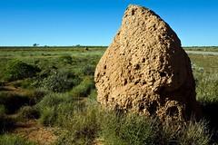 Termite Mounds (C) 2008
