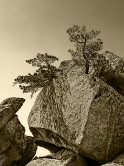 Rock and Trees Mt Huashan por Daniel Schwabe