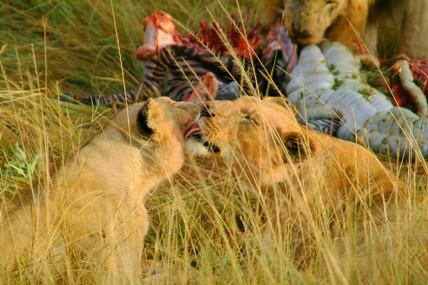 Мое второе пришествие в Кению, часть 6, авт DIK DIK