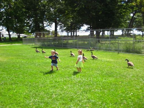 Running with the Geese