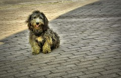 kuukuu (Zleyha Sucu) Tags: street dog animal stone turkey zoo trkiye walkway lovely kaldrm sokak kpek hayvan yalova ta ehir hayvanat flickrcolour fotorafkraathanesi aplusphoto kp bilibili ilovemypics kuukuu