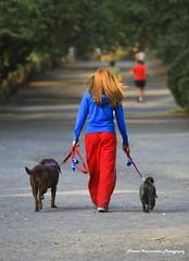 DOG WALKER IN RED & BLUE