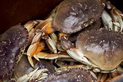 Dungeoness Crabs