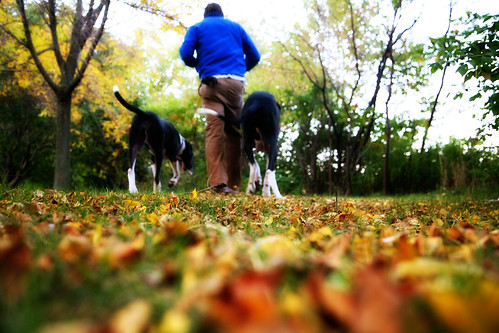 fall with the puppies
