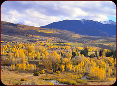 "There are no red leaves in Colorado. (""alley cat photography') Tags: autumn green gold pines aspens vailcolorado autumngold"
