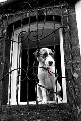 Dog in window (Maria Berggrd Silow) Tags: dog window islands sony ponta alpha 700 azores delgada