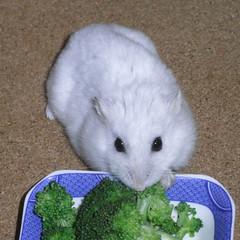 ブロッコリーを食べるましろ