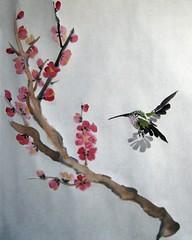 Drabber hummingbird