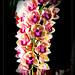 1 canh hoa than tang cac ban
