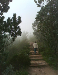 Misty Lions Head (mallix) Tags: africa trees cloud mist mountain mountains tree nature wet misty dark walking southafrica outdoors evening climb spring energy exercise natural hiking path capetown tourist hike fresh spooky climbing trail anton worldcup activity peninsula range stroll ot fit gravel tablemountain lionshead damp fynbos 2010 visibility moist silverleaf toursim soccerworldcup kloofnek worldcup2010 fifa2010