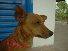 red hair niece (Alessandra Carreo) Tags: dog pet mutt viralata fadinha