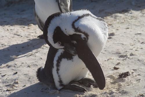 penguin blew a seal joke