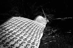 Coming to Bhutan (sgrazied) Tags: light blackandwhite bw travelling bhutan wind flag rimini canoneos20d oriente movimento prayerflags ricordi prayers freetibet biancoenero vento romagna dinamismo scorci viaggiare buddismo preghiere sgrazied interphoto aprile2008 indiaebhutan cavallidelvento