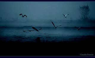 Blue soul - il volo nell'anima