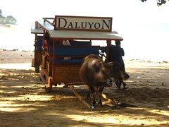daluyon carabao carriage