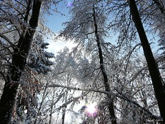 Winter dream  (Dave ***) Tags: winter sun white snow tree ice dave forest dream dezember wald mywinners abigfave