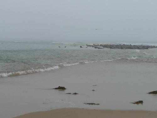 Pile o' Seals