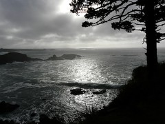 Late Sun Thru Fog (judi berdis) Tags: sea tree nca mendocinocoast