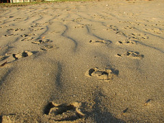 Birdy Footprints (Fey Child) Tags: birds sunrise sand shadows footprints sandgate brisbanemeetup