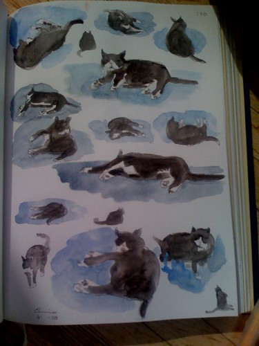 ivo cat drawings