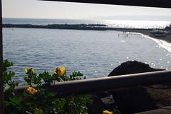(Girovagando) Tags: flowers sea beach nikon san mare bambini napoli fiori giovanni scogli d80
