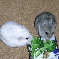 ブロッコリーを食べるコーキとましろ