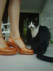 Melissa + gato (castelosdeareia) Tags: laranja melissa 35 vixen