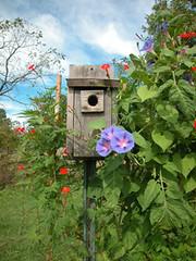Garden bird house
