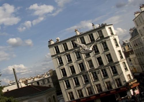 pigeon capture