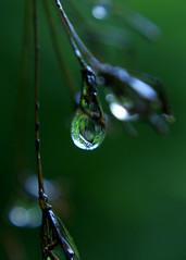 Another Refraction (binaryCoco) Tags: light green nature water rain licht wasser natur hannover drop grün regen wassertropfen tropfen laatzen bej teufelskuhle