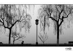 At The Lake (Monika Ostermann) Tags: china monikaostermann sw bw asia lake hanzhou tree trees park 100commentgroup blackwhitephotos creattivit