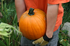 sam carries the pumpkin
