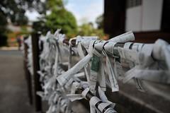 Kyoto 2008 - 三十三間堂(2)