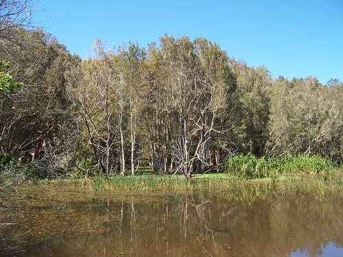 Everglades Wetland Woy Woy