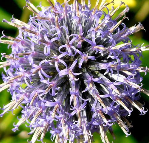Blue flower firework